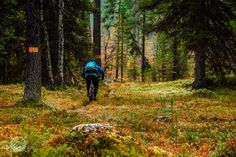 Exploring the riding opportunities north of the Arctic Circle in the land of reindeer and the midnight sun. Arctic Circle, Midnight Sun, User Experience, Mountain Biking, Bike, Explore, Travel, Bicycle, Viajes