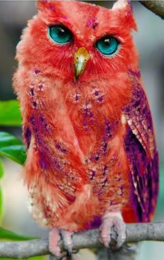 Awesome acid princess owl