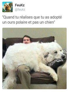 Quand tu réalises que tu as adopté un ours polaire