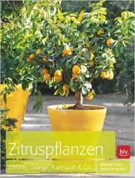 Bildergebnis für zitruspflanzen arten