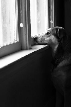 Heartwarming Pictures of Dogs in Windows | Abduzeedo | Graphic Design Inspiration and Photoshop Tutorials