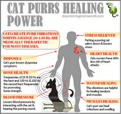 El poder curativo del ronroneo del gato - The healing power of purring cat Crazy Cat Lady, Crazy Cats, Albert Schweitzer, Gato Gif, Amor Animal, Info Board, All About Cats, Cat Facts, Animal Facts