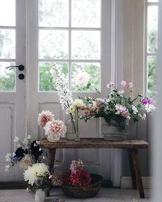 Anna Kubel (@annakubel) • Foton och videoklipp på Instagram Shade Plants, Green Plants, Beautiful Flower Arrangements, Beautiful Flowers, Cut Flowers, Wild Flowers, Floral Photography, Outdoor Plants, House Plants