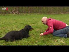 Richtig spielen mit Hunden   WDR - YouTube