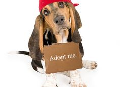 Useful pets adoption tips before adopting!