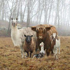 The Dog &a Pony Show by Rob MacInnes