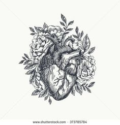 Lovely >> Anatomical Inventory Vectors & Vector Clip Artwork
