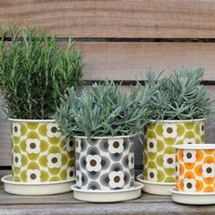 These would be great for kitchen window herbs. I might be losing my outdoor space, but I refuse to lose all my greenery!