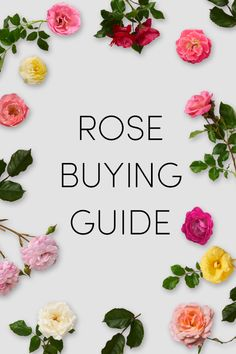 Growing roses doesn't have to be difficult. With the Easy Elegance® rose buying guide, we'll walk you through choosing the best rose bush for your garden. #Roses #RoseBuyingGuide #GardeningInspiration #GardeningIdeas