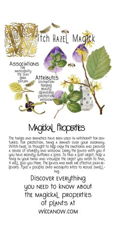 Witchcraft Herbs, Witchcraft Books, Green Witchcraft, Plant Magic, Magic Herbs, Herbal Magic, Herbal Witch, Witch Herbs, Wicca