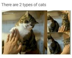 Two types of cats....high fives! Nommms