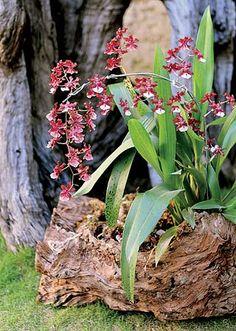 Jardim sustentável: decore com troncos                                                                                                                                                                                 Mais