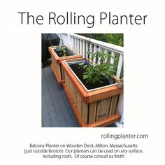 "M-CAFE ( 4 Sizes ) COMMERCIAL QUALITY ""ROLLING PLANTER.""  Stable and able to move over heavy door jambs.  Designed for small intimate locations. Grow almost everything in this planter, best for plants that need deep roots, including trees. Fully assembled.  Made from sustainably grown cedar/fir, case hardened and marine epoxy/ glass coated steel screws/ bolts, tri-ply liner and plumbed drains. Designed, handmade and shipped from Ventura, California, USA 805.643.5902  www.rollingplanter.com Planter Box Plans, Garden Planter Boxes, Garden Structures, Outdoor Structures, Tiny House Exterior, House Exteriors, Raised Planter Beds, Balcony Planters, Landscaping Plants"