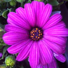 Garden pretties