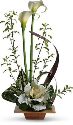 Two white calla lilies are mixed with kale, aspidistra, brown flax, pitta negra and galax leaves in a natural bamboo dish.