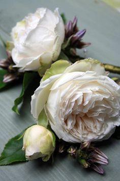 white garden rose boutonnieres - Garden Rose Boutonniere