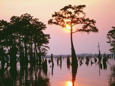 Louisiana Bayou. Photo by Bev Heald