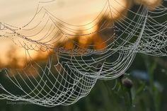 http://ift.tt/1ZY8ZTJ #Nature breathtaking #Photos In the morning at sunrise by elenasolovieva http://ift.tt/21jkB4m