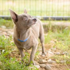 My name is Harley Jr.  I was recued by my Dad, Harley and Uncle Teddy with NMDR Team in 2013. This was one of the best days ever! My first time walking on grass and the first time I was able to see the sky. I never got to walk on grass or see the sky at the puppy mill. I walked on a wire cage and usually when I looked up I would see another cage with more dogs. The volunteers at National Mill Dog Rescue walk all the big dogs everyday. They would take us little ones out to the grassy area and…