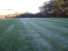 Daleys Turf farm on a frosty morning at Beerwah, Sunshine Coast, Qld, Australia