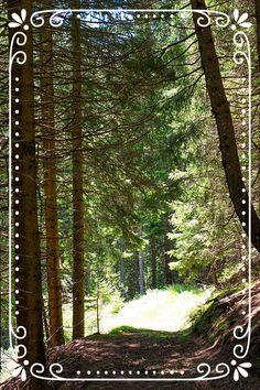Leckere Rezepte mit Zutaten aus dem Wald Plants, Vegetarian Recipes, Woodland Forest, Nature, Plant, Planets