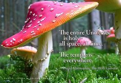 """Paraphrase from """"The Temple of the Infinite,"""" page 334 of The Holy Universe. http://theholyuniverse.com #ecospirtuality"""