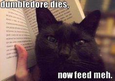 feed meh! meekalo