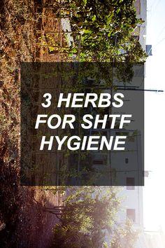 3 Herbs for SHTF Hygiene | Survival Shelf | Survivalist & Prepper Links