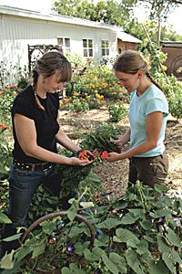 Companion Planting: So Happy Together!