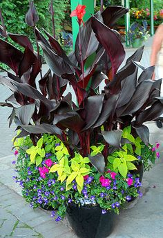 372 Best Mixed Containers Images Plants Container Gardening Garden