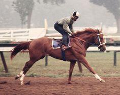 SECRETARIAT & CHARLIE DAVIS - 11X14 ORIGINAL 1973 WORKOUT PHOTO AT SARATOGA! in Sports Mem, Cards & Fan Shop, Fan Apparel & Souvenirs, Horse Racing | eBay
