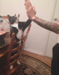 Crow giving Andy a high five