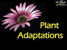 Plant adaptions slide show!