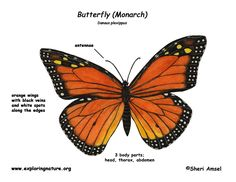 monarch butterfly animation | monarch caterpillar clipart. caterpillars eat milkweed
