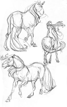 Discover thousands of images about How to draw horses. My friend Meghan really loves horses, so I geuss that I gonna to make a horse sketch for her! Horse Drawings, Animal Drawings, Animal Sketches, Drawing Sketches, Sketching, Horse Anatomy, Animal Anatomy, Horse Sketch, Equine Art