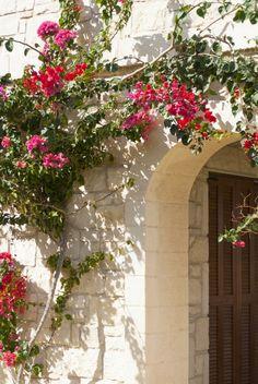 gartengestaltung-mediterrane-schatten-bogen-kletterpflanze-romantisch-atmosphaere