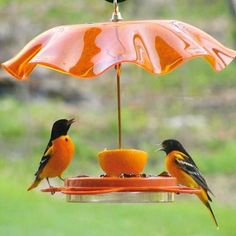 Oriolefest Bird Feeder shown with Weather Guard