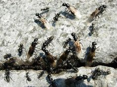 Das große Krabbeln - Ameisen im Haus