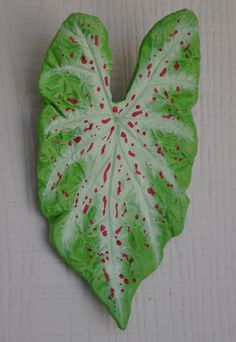Miss Muffet Caladium wall art created from a real leaf.