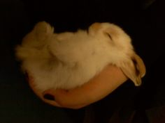 Sleepy Bunny Is Cradled in One Hand - August 18, 2011