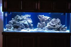 Do you have nice aquascaping? if so let's see it.. - Page 2 - Reef Central Online Community