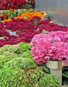 1st NYC Fall Flower Market Report: chock full of hydrangea in many surprising colors