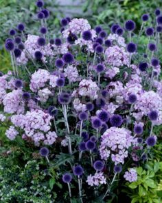 My Favorite Plant Combinations 56