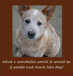 how to train a deaf australian cattle dog