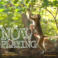 Grab a vine and swing into theatres; #MonkeyKingdom is now playing.  See the movie, make a difference now.  http://di.sn/60064CyM