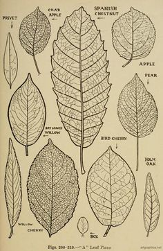 how to draw tree leaves