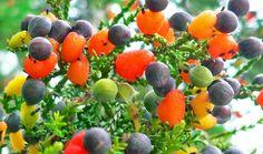 Nevjerojatno stablo s 40 različitih vrsta voća - Jutarnji List