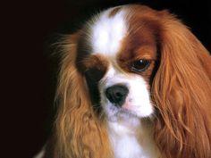 Köpek resimleri-06