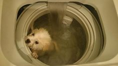 A man who posted Facebook photos of a puppy seemingly drowning in a washing machine has now threatened to kill several other dogs, sparking protests from netizens.
