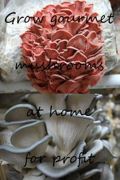 Growing gourmet mushrooms from home for profit isn't as complicated as it sounds. We can help you get started on your adventure with your home based business. Grow Your Own Mushrooms, Growing Mushrooms At Home, Mushroom Grow Kit, Natural Farming, Organic Farming, Organic Gardening, Gardening Tips, Edible Mushrooms, Stuffed Mushrooms